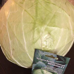 Польза капусты белокочанной